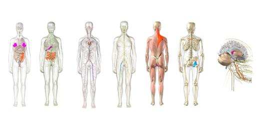 3D-presentatie - Onze bodyscan